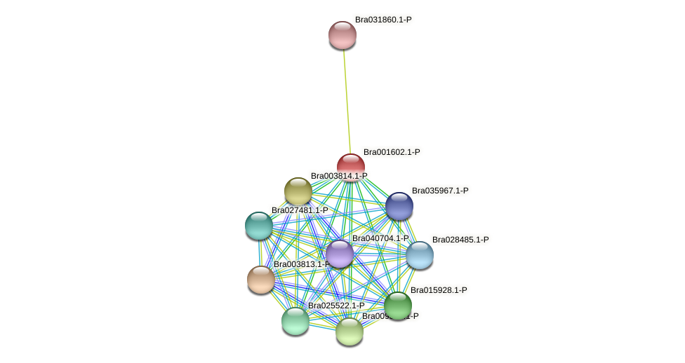 Bra001602 protein (Brassica rapa) - STRING interaction network