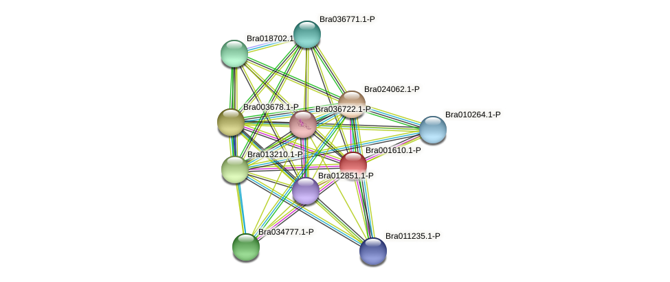 Bra001610 protein (Brassica rapa) - STRING interaction network