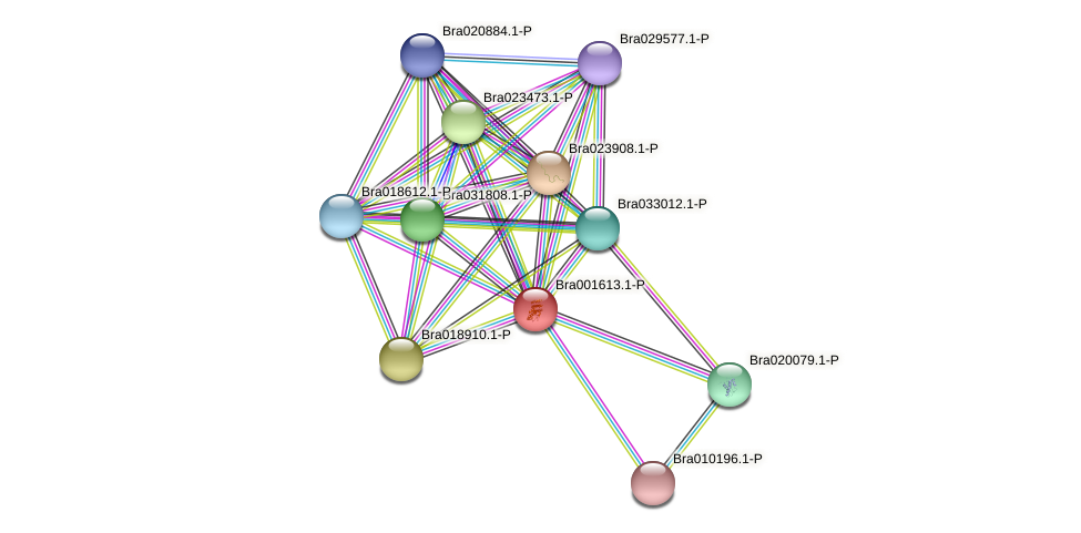 Bra001613 protein (Brassica rapa) - STRING interaction network
