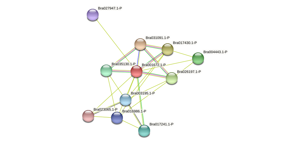 Bra001672 protein (Brassica rapa) - STRING interaction network