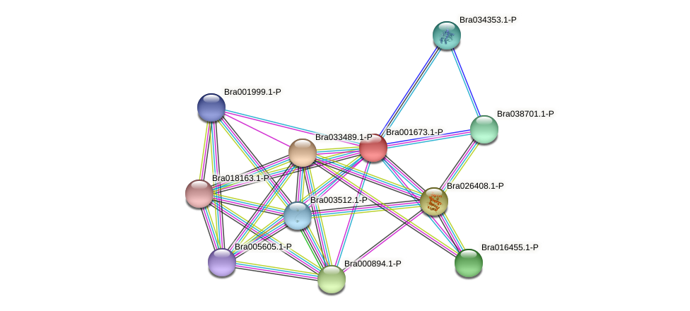Bra001673 protein (Brassica rapa) - STRING interaction network