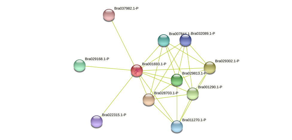 Bra001693 protein (Brassica rapa) - STRING interaction network