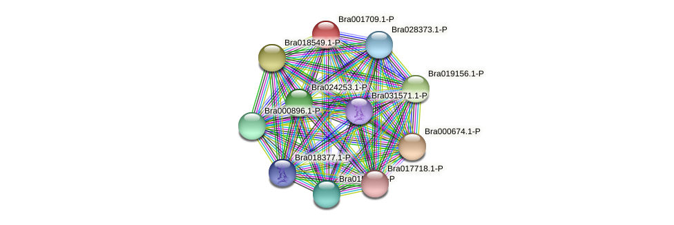 Bra001709 protein (Brassica rapa) - STRING interaction network