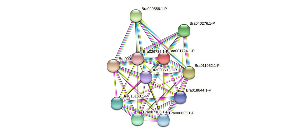 Bra001724 protein (Brassica rapa) - STRING interaction network