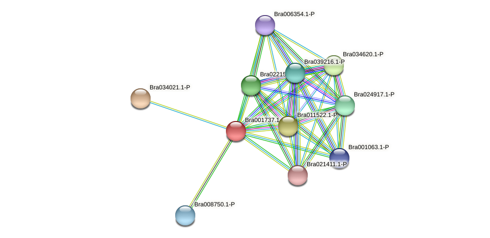 Bra001737 protein (Brassica rapa) - STRING interaction network