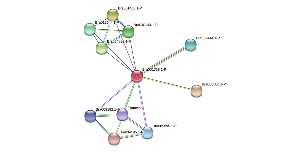 Bra001738 protein (Brassica rapa) - STRING interaction network