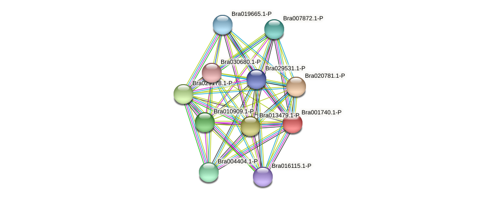 Bra001740 protein (Brassica rapa) - STRING interaction network