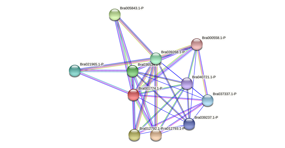 Bra001774 protein (Brassica rapa) - STRING interaction network