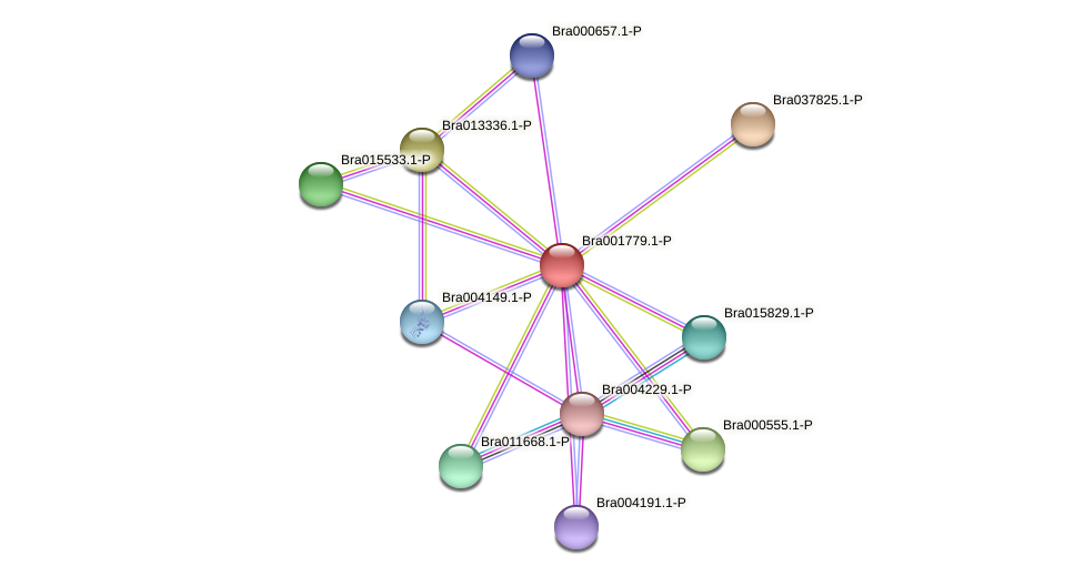 Bra001779 protein (Brassica rapa) - STRING interaction network