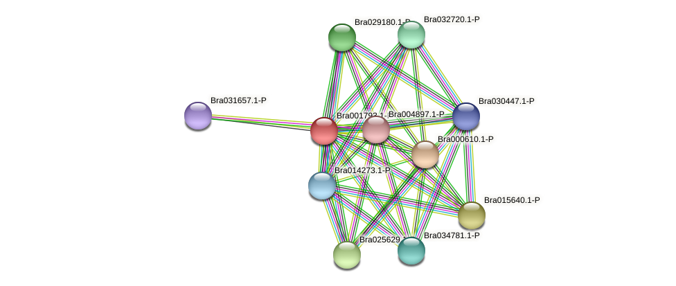 Bra001793 protein (Brassica rapa) - STRING interaction network