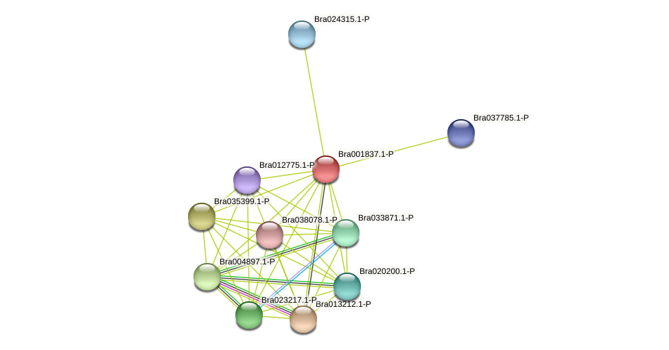 Bra001837 protein (Brassica rapa) - STRING interaction network