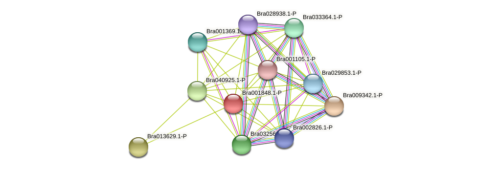 Bra001848 protein (Brassica rapa) - STRING interaction network