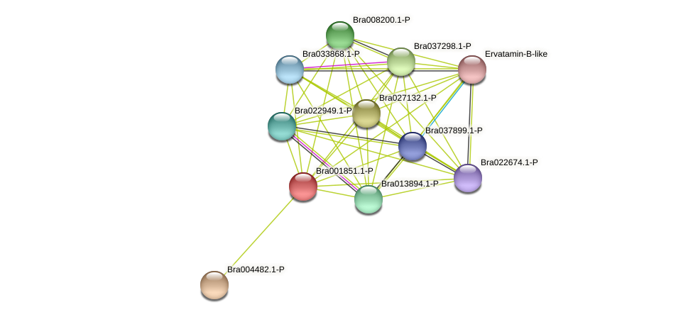 Bra001851 protein (Brassica rapa) - STRING interaction network