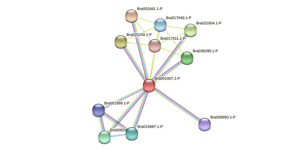 Bra001907 protein (Brassica rapa) - STRING interaction network