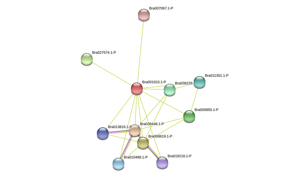 Bra001910 protein (Brassica rapa) - STRING interaction network