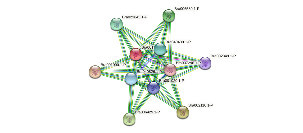 Bra001921 protein (Brassica rapa) - STRING interaction network