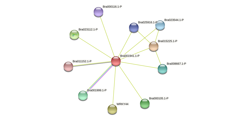 Bra001941 protein (Brassica rapa) - STRING interaction network