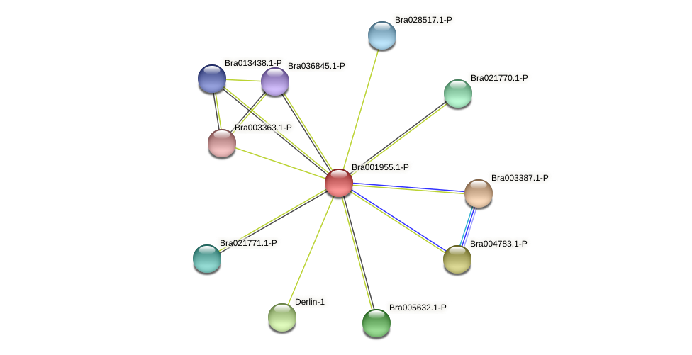 Bra001955 protein (Brassica rapa) - STRING interaction network
