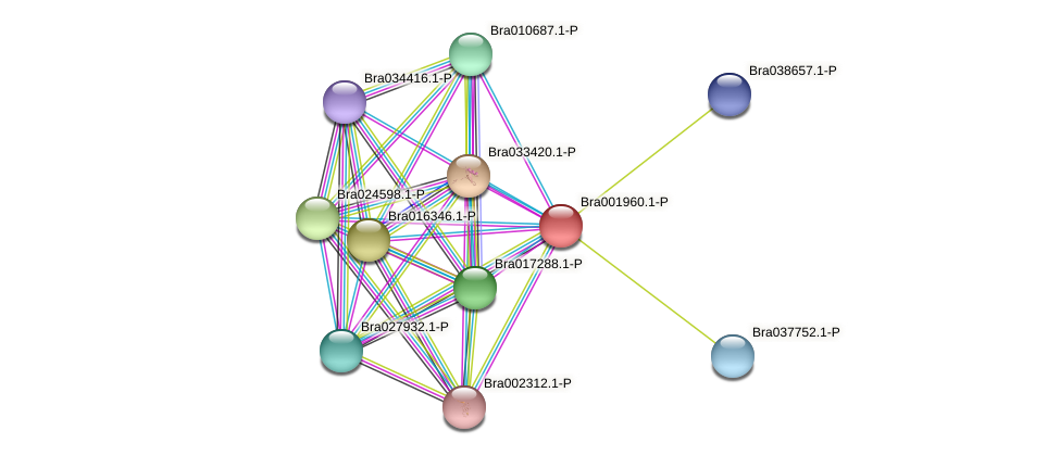 Bra001960 protein (Brassica rapa) - STRING interaction network