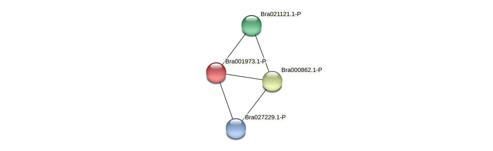 Bra001973 protein (Brassica rapa) - STRING interaction network