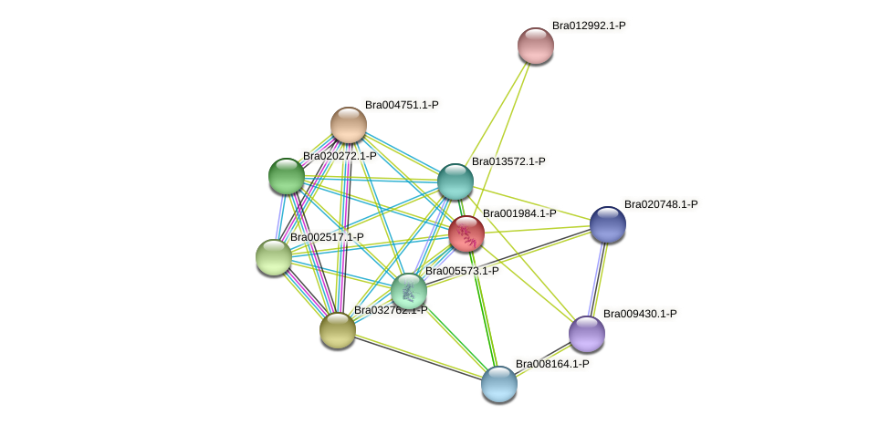 Bra001984 protein (Brassica rapa) - STRING interaction network