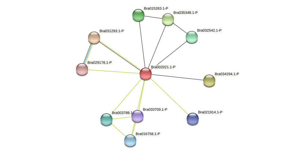 Bra002021 protein (Brassica rapa) - STRING interaction network