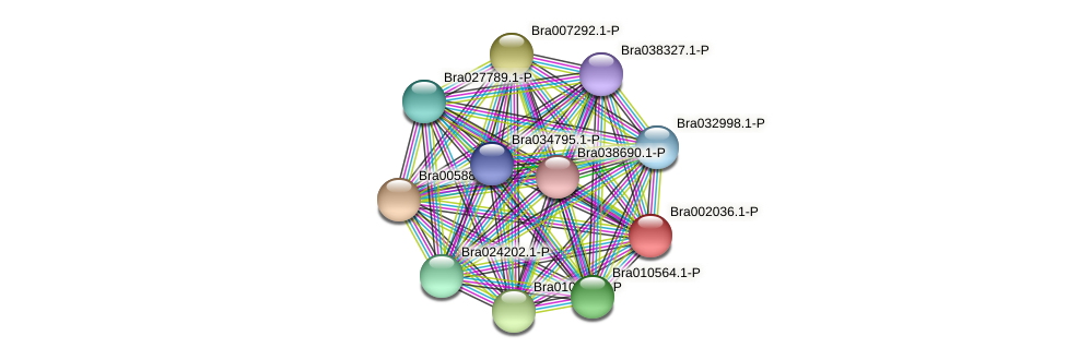 Bra002036 protein (Brassica rapa) - STRING interaction network