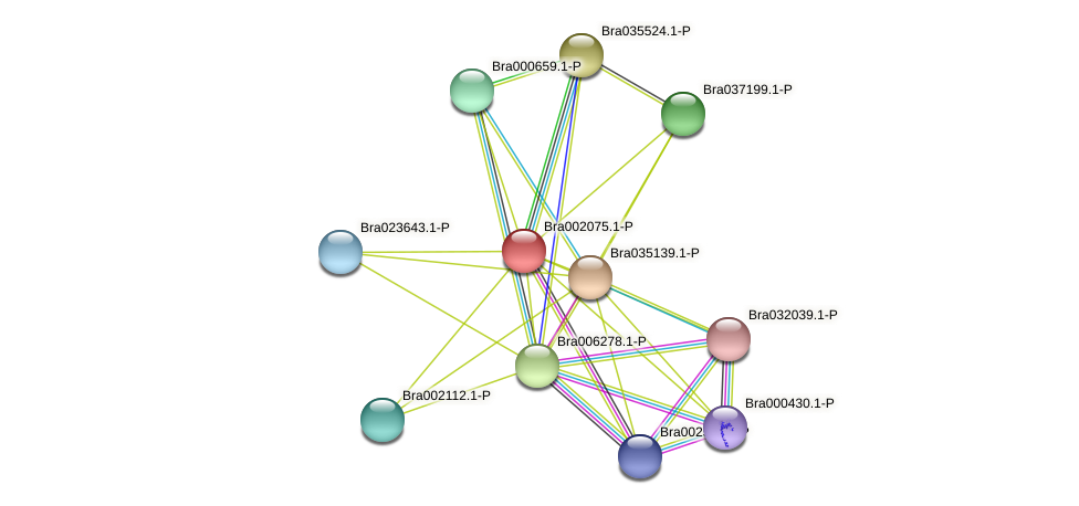 Bra002075 protein (Brassica rapa) - STRING interaction network