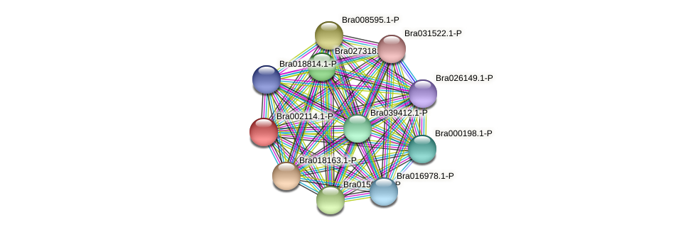 Bra002114 protein (Brassica rapa) - STRING interaction network