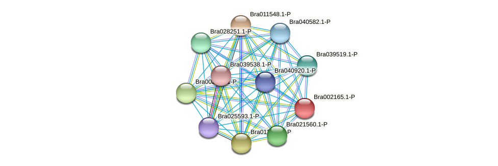 Bra002165 protein (Brassica rapa) - STRING interaction network