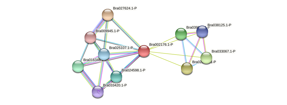 Bra002176 protein (Brassica rapa) - STRING interaction network