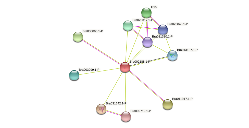 Bra002188 protein (Brassica rapa) - STRING interaction network