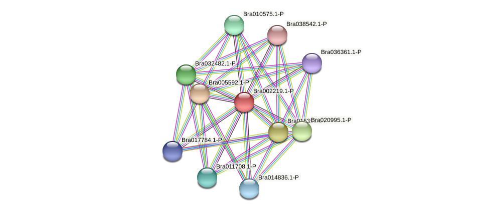 Bra002219 protein (Brassica rapa) - STRING interaction network