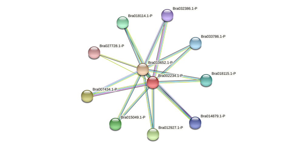 Bra002234 protein (Brassica rapa) - STRING interaction network