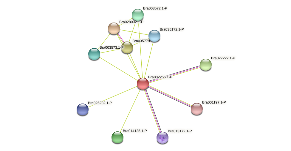Bra002256 protein (Brassica rapa) - STRING interaction network