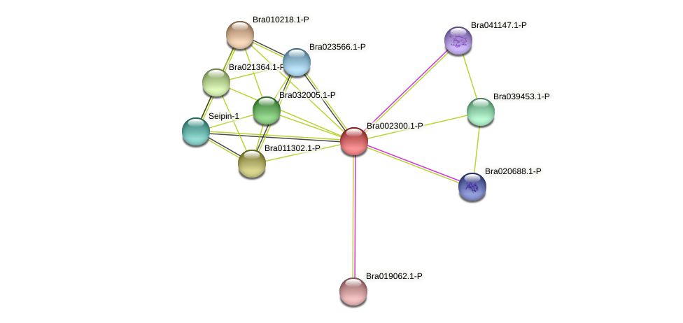 Bra002300 protein (Brassica rapa) - STRING interaction network