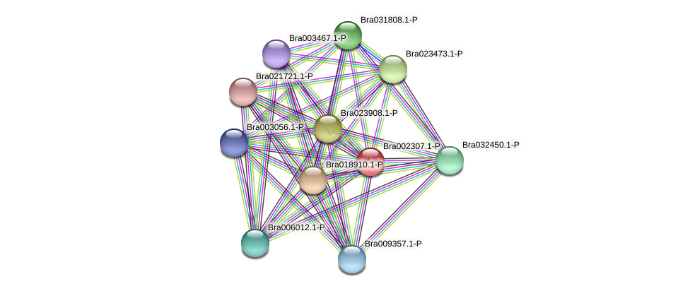 Bra002307 protein (Brassica rapa) - STRING interaction network
