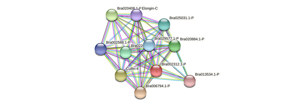 Bra002312 protein (Brassica rapa) - STRING interaction network