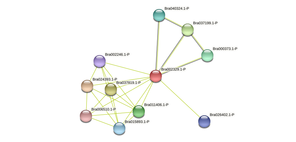 Bra002329 protein (Brassica rapa) - STRING interaction network