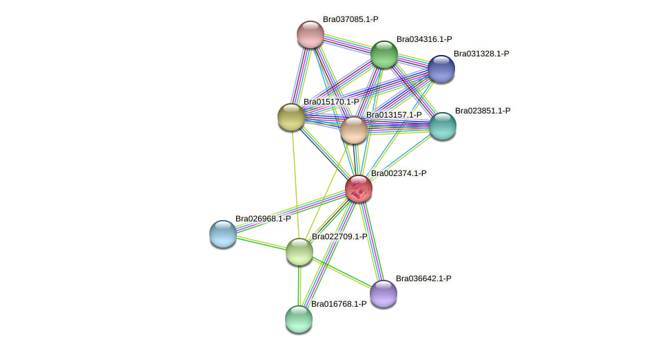 Bra002374 protein (Brassica rapa) - STRING interaction network