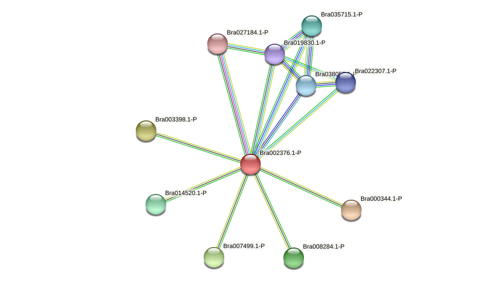 Bra002376 protein (Brassica rapa) - STRING interaction network