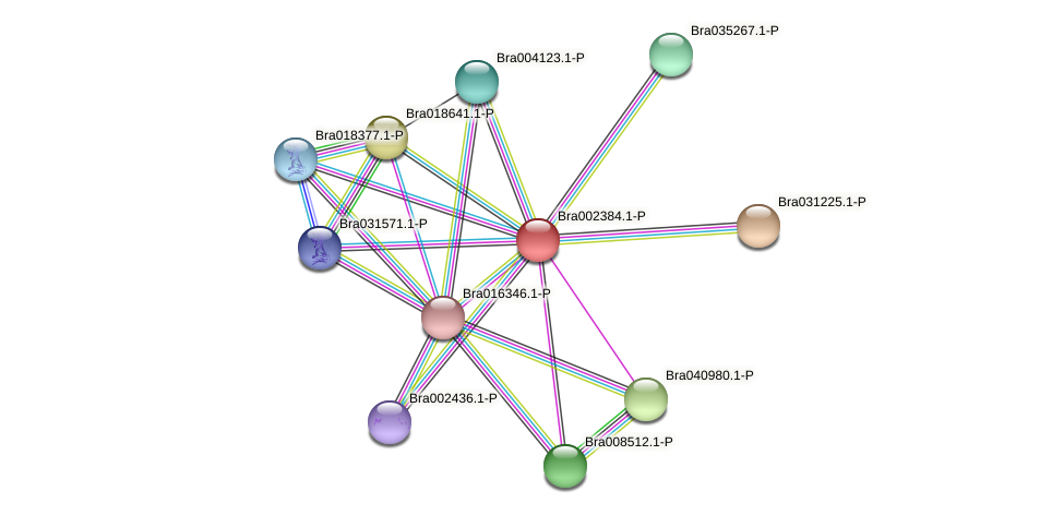 Bra002384 protein (Brassica rapa) - STRING interaction network