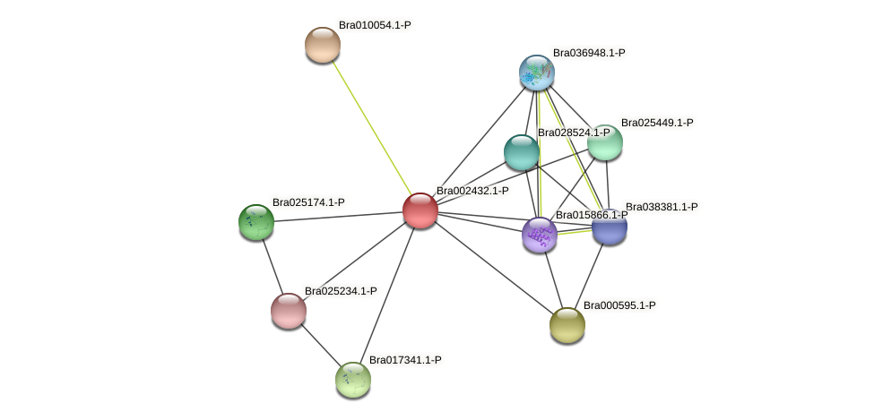 Bra002432 protein (Brassica rapa) - STRING interaction network