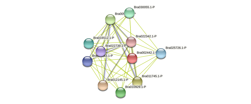 Bra002442 protein (Brassica rapa) - STRING interaction network