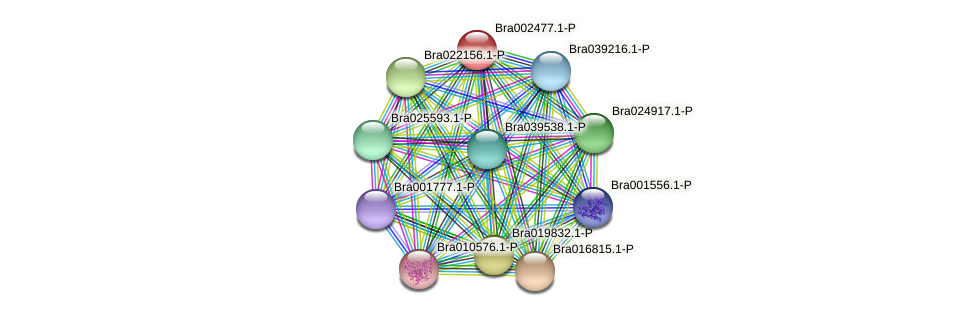 Bra002477 protein (Brassica rapa) - STRING interaction network