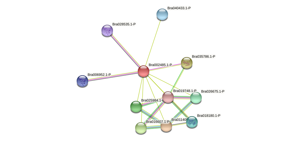 Bra002485 protein (Brassica rapa) - STRING interaction network