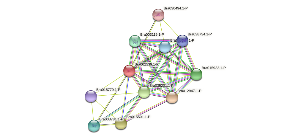 Bra002539 protein (Brassica rapa) - STRING interaction network