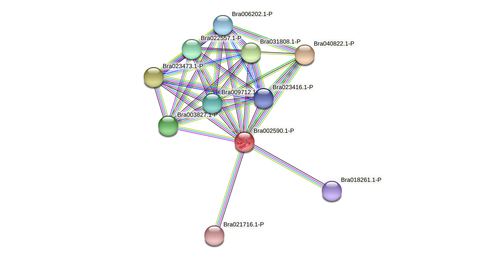 Bra002590 protein (Brassica rapa) - STRING interaction network