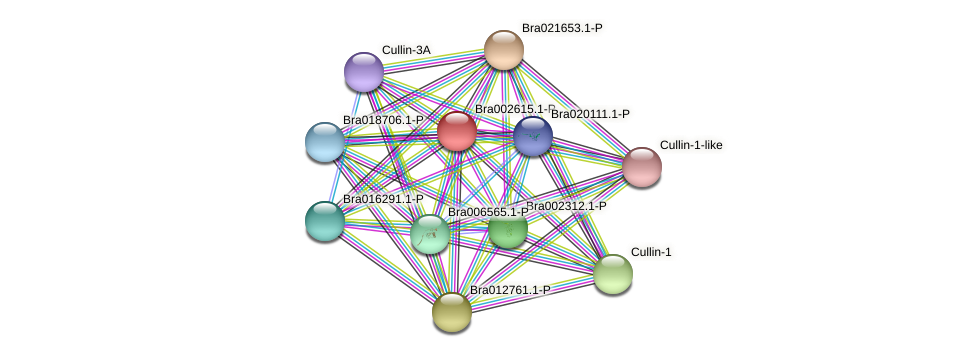 Bra002615 protein (Brassica rapa) - STRING interaction network