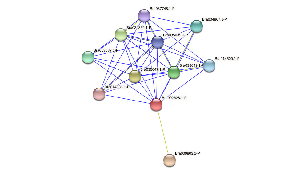 Bra002628 protein (Brassica rapa) - STRING interaction network